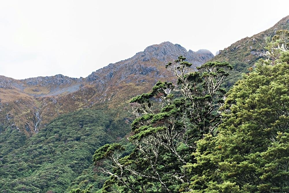 New Zealand  |  Candace Berry Photography006
