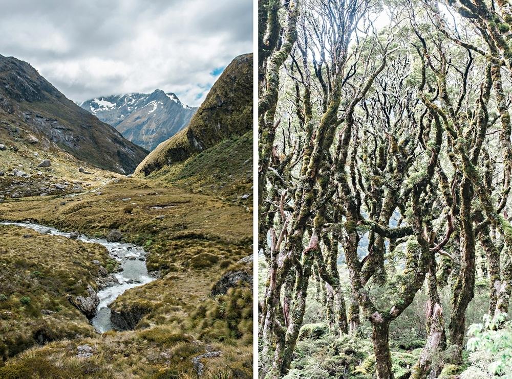 New Zealand  |  Candace Berry Photography014