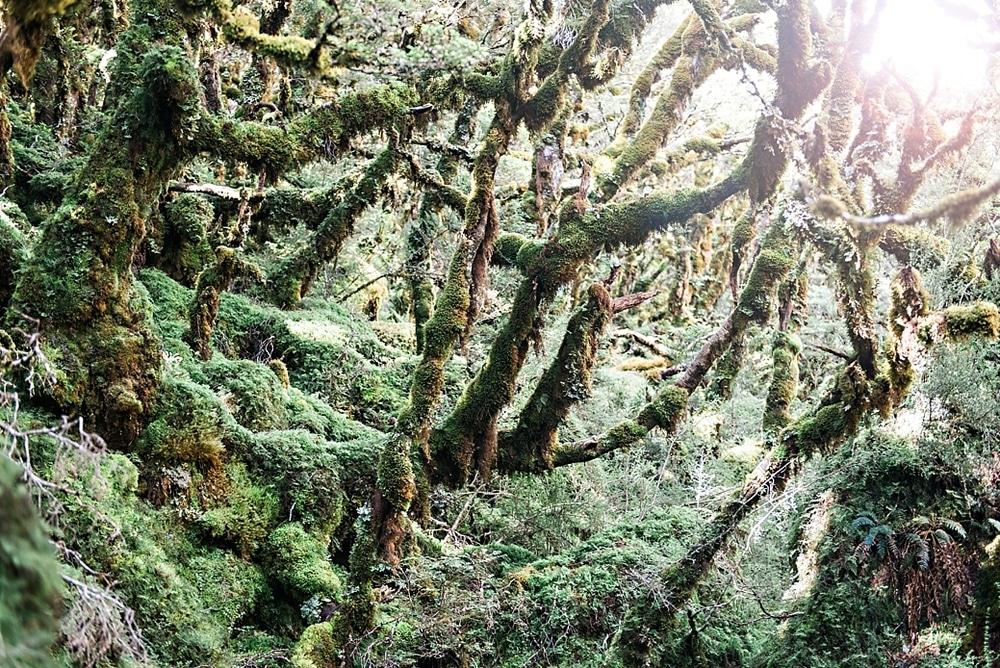New Zealand  |  Candace Berry Photography027