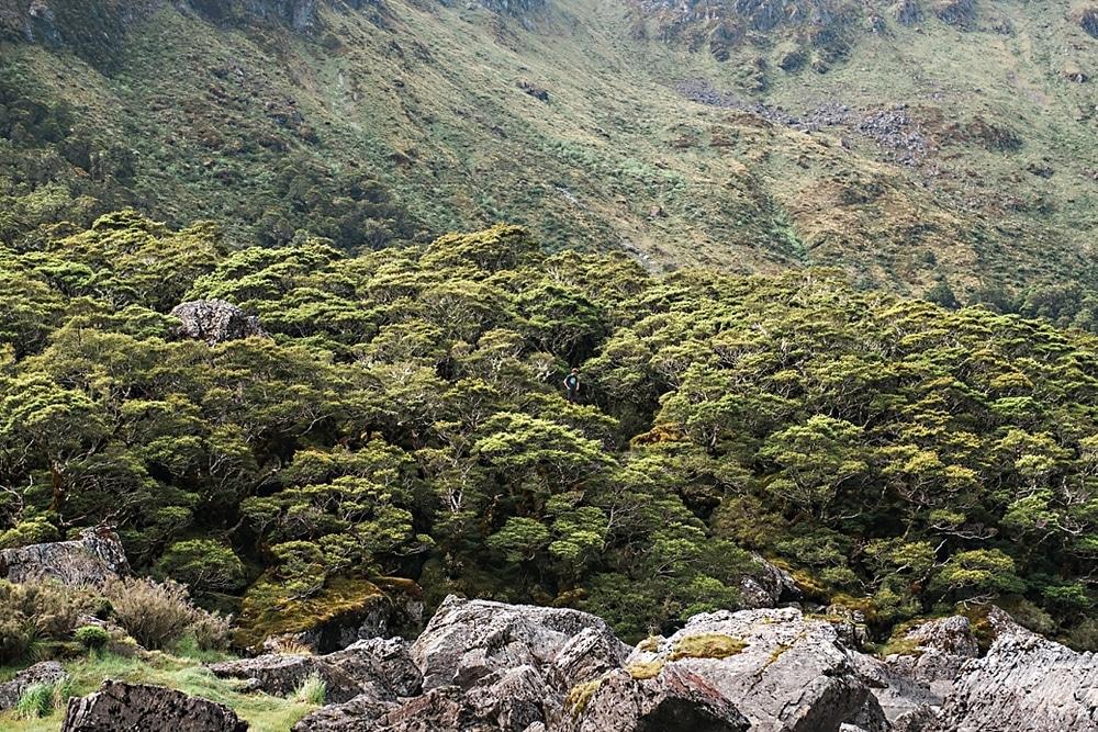 New Zealand  |  Candace Berry Photography028