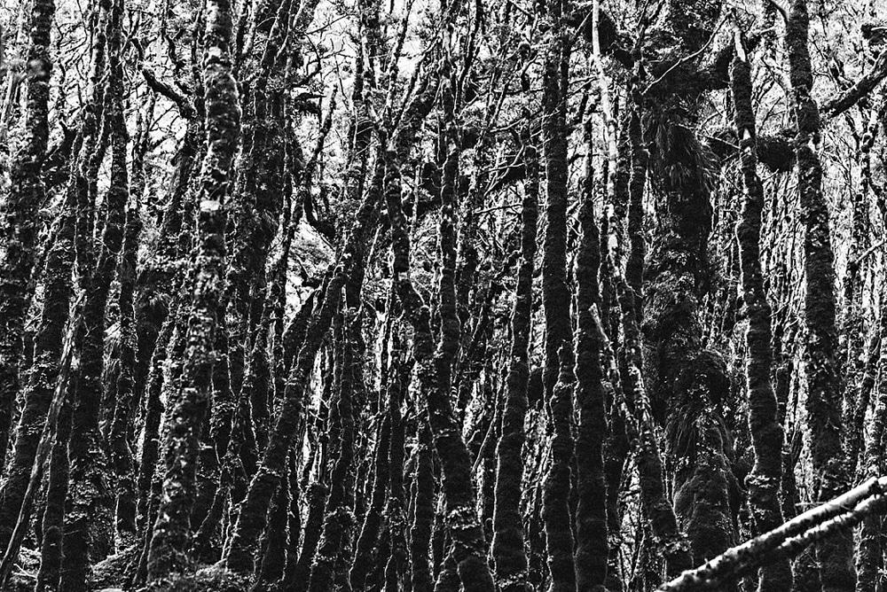 New Zealand  |  Candace Berry Photography029