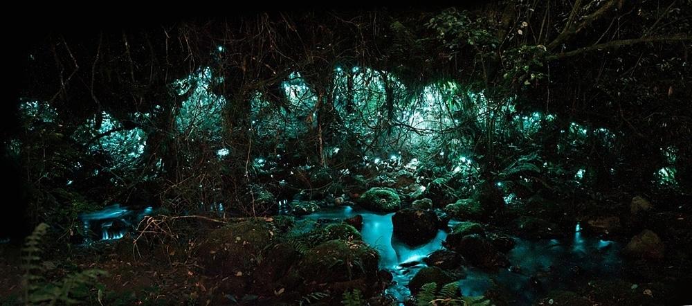 New Zealand  |  Candace Berry Photography118