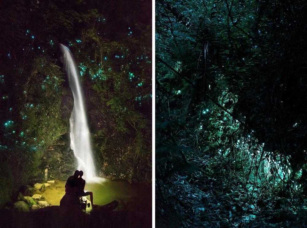 New Zealand  |  Candace Berry Photography119