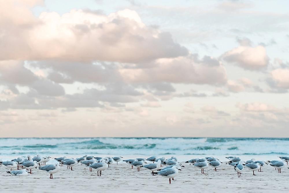 New Zealand  |  Candace Berry Photography135