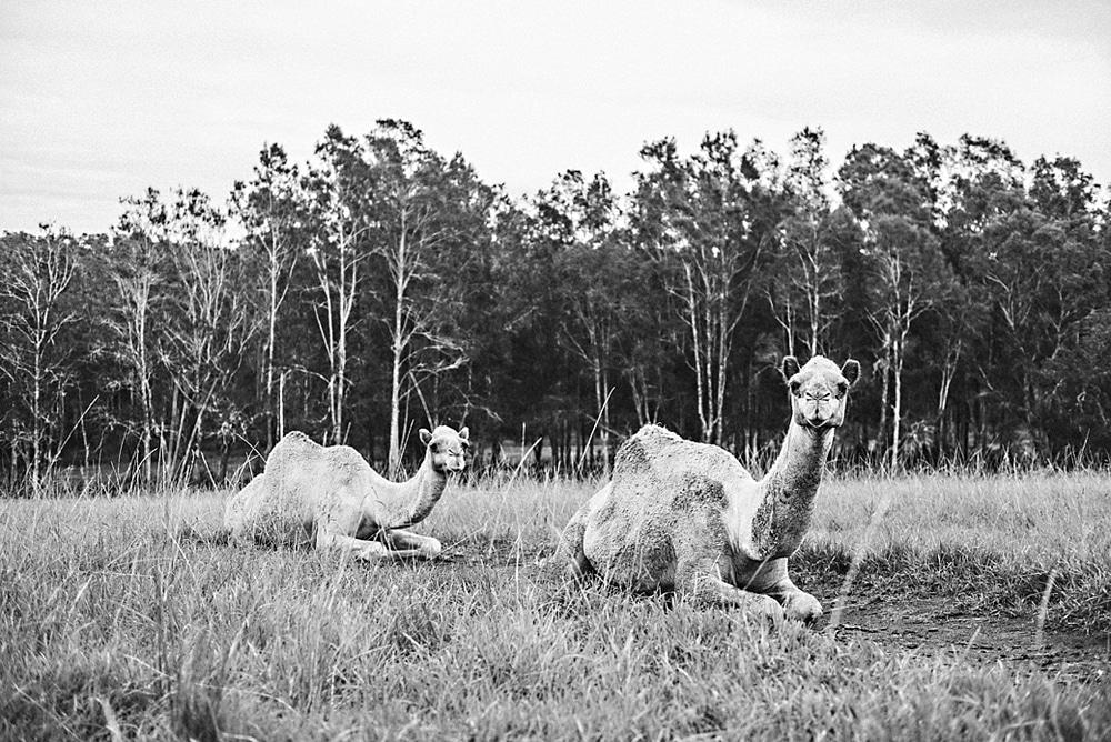 New Zealand  |  Candace Berry Photography165